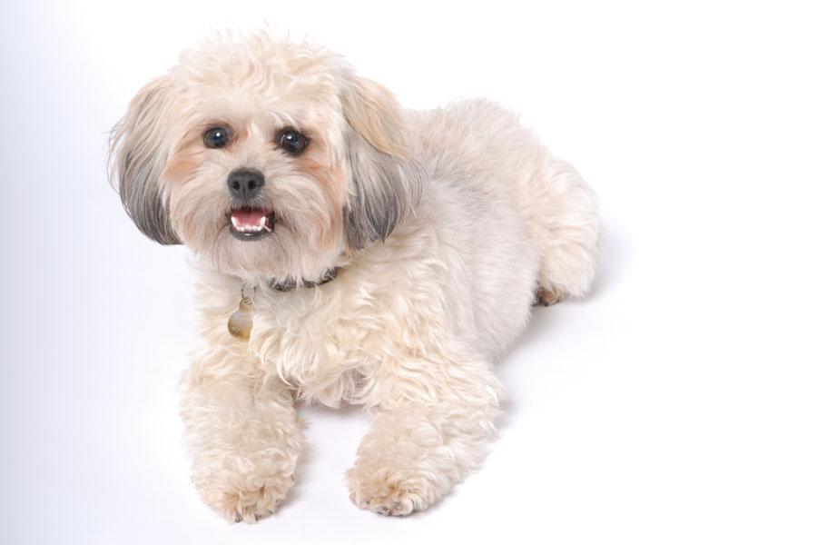 Just the cutest puppy in the world!!   I'll miss you soooooo much!!!