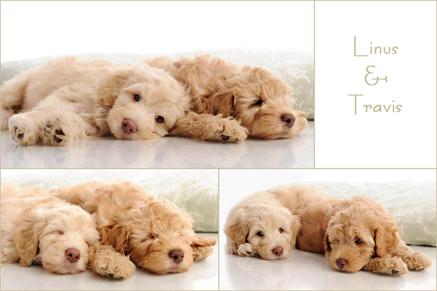 Linus & Travis' First Photo Shoot: These brothers sure do like to cuddle!