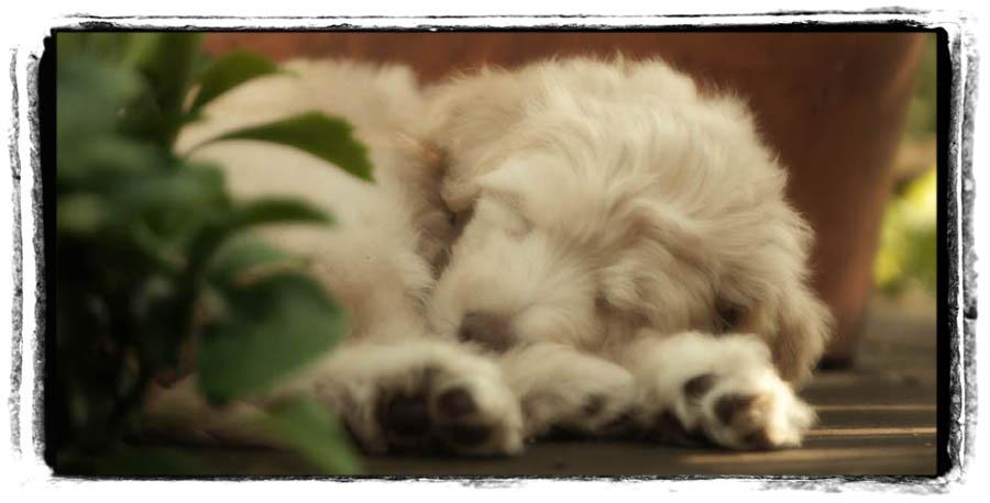 Sleepy Linus